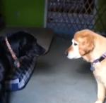 Minni and Maverick