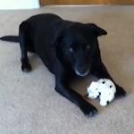 Sammy the Singing Dog